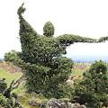 写真: 100511-37木の芸術3