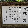 写真: 100513-27九州ロングツーリング・高千穂神社の杉
