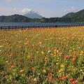 写真: 100516-39花と池田湖と開聞岳