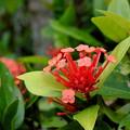Photos: 東南植物楽園 花