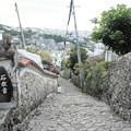 Photos: 首里金城町石畳道
