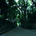 Photos: 近所の公園
