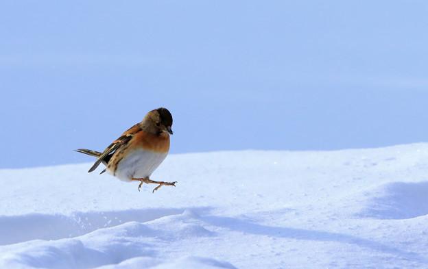 写真: ジャンプ!