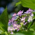 Photos: 紫・・・