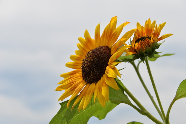 Photos: 夏の花?