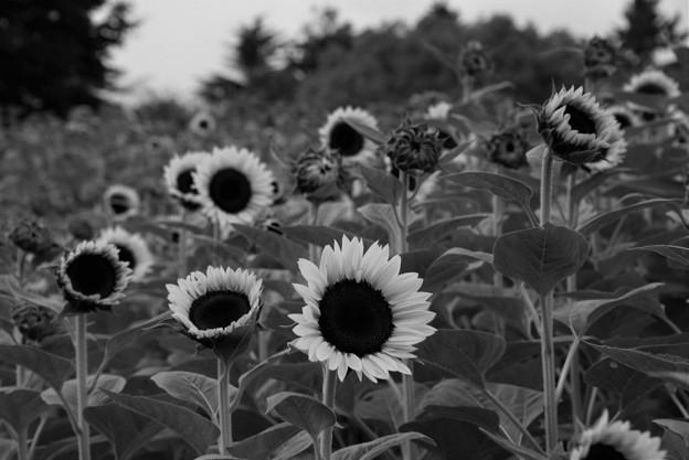 Photos: 夏の想いで