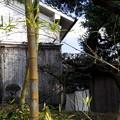 写真: 古民家の裏木戸