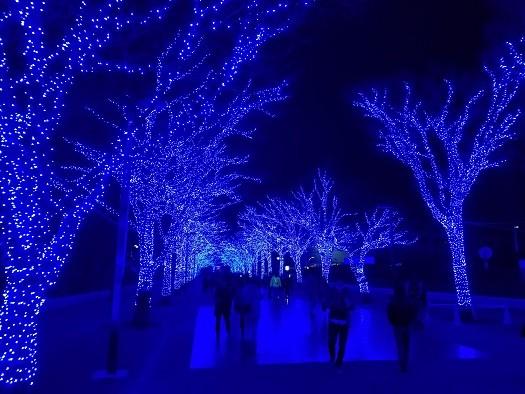 写真: 青の洞窟 SHIBUYA