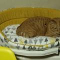 Photos: 猫ベッド
