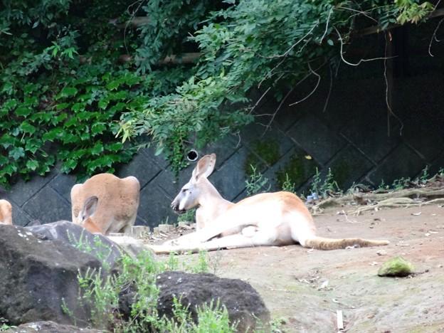 よこはま動物園ズーラシアDSC01889