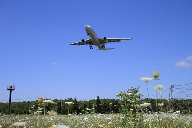 A330 CTS 盛夏