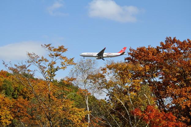 A330 紅葉真っ盛り