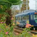 阪堺電気軌道 阪堺線