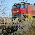 Photos: EF510-20【4071レ】