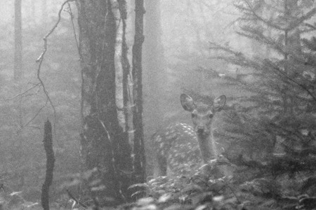 霧の向こうに