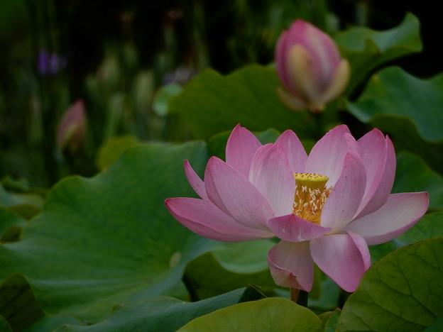 溜息が出るほど美しい花
