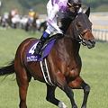 写真: サンライズプリンス 返し馬