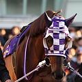 写真: フリオーソ2_2010東京大賞典