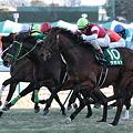 写真: 2011京成杯直線