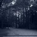 森の道(モノトーン)