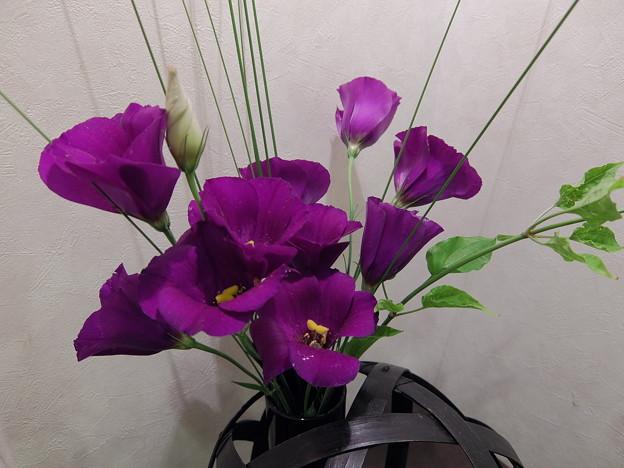 待合室の花(寒)