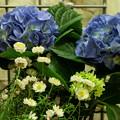 待合室入り口の花