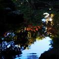 次郎弁天池にも彩りを落とす