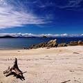 写真: 流木の浜辺