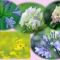 Photos: 6月花セレクト