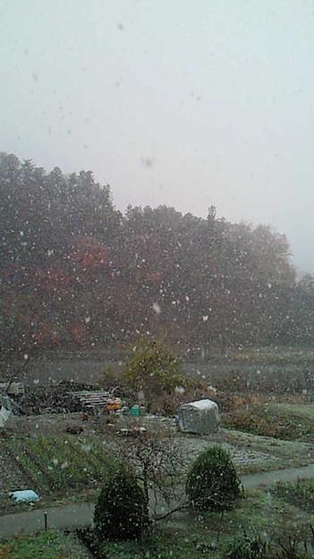 小鹿野町、結構、雪降ってる。