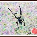 Photos: 「蜘蛛のアレンジです・・」 ・・・