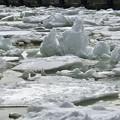 写真: 釧路港に来た流氷