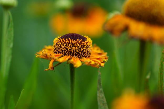 ユニークな花は~