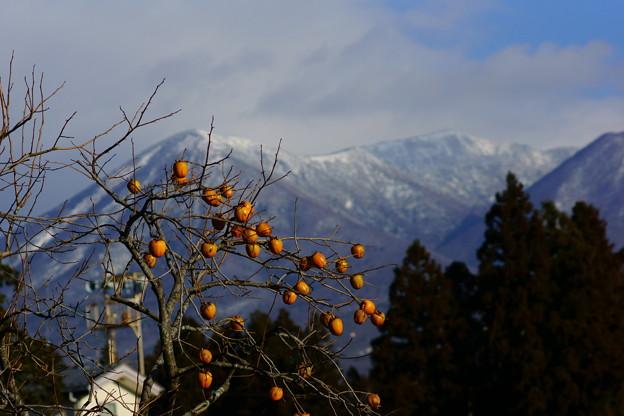 柿の木と那須のお山