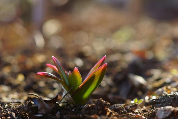 春かしら~