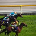 Photos: 優駿牝馬2016 シンハライト