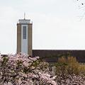 Photos: 春と教会