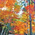 杉木立の経蔵(輪蔵)の秋 in 大本山仏通寺
