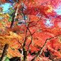 見上げれば 参道の紅葉 in 仏通寺