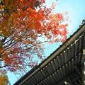 見上げると 仏殿(法堂)の秋 in 大本山佛通寺