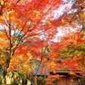 Photos: 永徳院の秋 in 大本山佛通寺