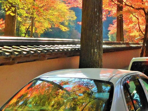 参道の 車列もカラフルに 紅葉中。