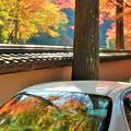 Photos: 参道の 車列もカラフルに 紅葉中。