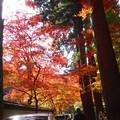 錦秋の佛通寺 参道の紅葉