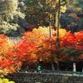 写真: 深山幽谷 永徳院の秋 in 大本山仏通寺