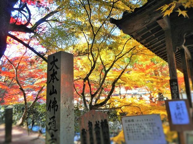 大本山仏通寺の秋