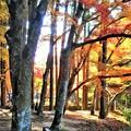 仏通寺川(活龍水)に架かる 飛猿橋の紅葉
