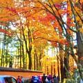 参道の秋 in 大本山仏通寺