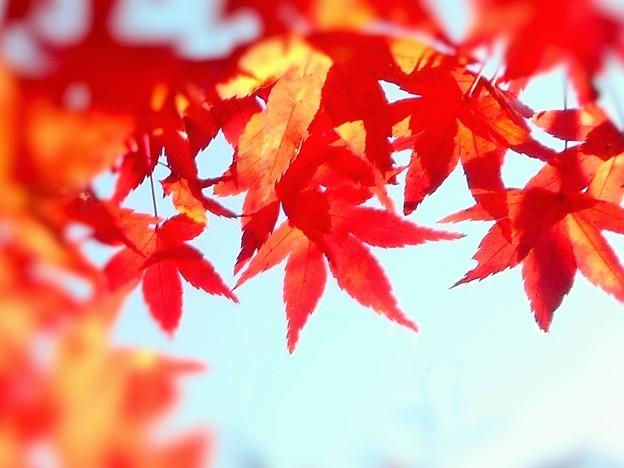 古刹・仏通寺の紅葉