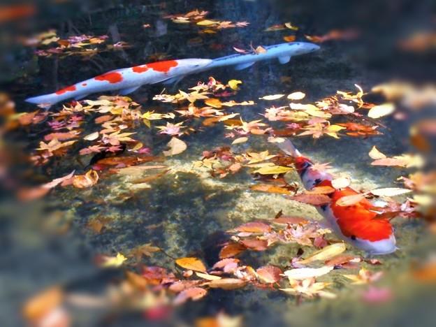雪舟作(伝)の 晩秋の崑崗(こんこう)池 in 古刹仏通寺